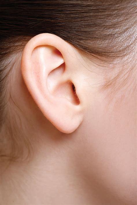 with ears ear vestibulocochlear system
