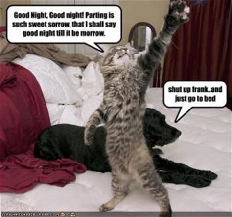 Goodnight Meme Cute - funny goodnight sayings kappit