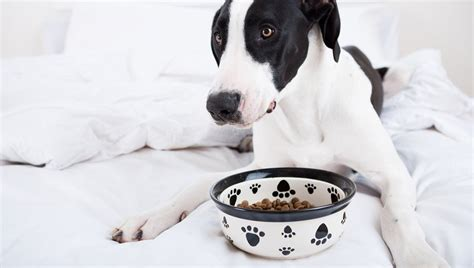 anorexia in dogs 5 disorders that affect dogs dogtime