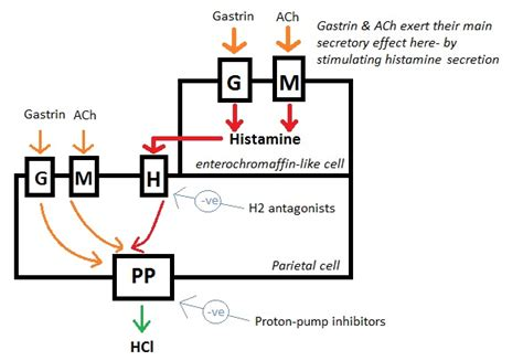 Is Zantac A Proton Inhibitor by Antacids H2 Antagonists Ppis Proton Inhibitors