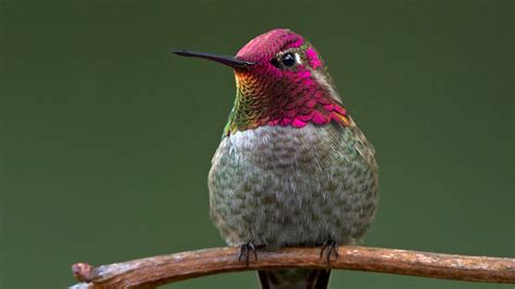 google hummingbird the keyword what you need to know to