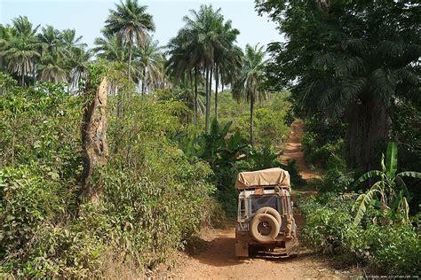 land rover jungle jungle animals border land rover jungle