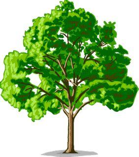 nama bagian bagian pohon  bahasa inggris beserta