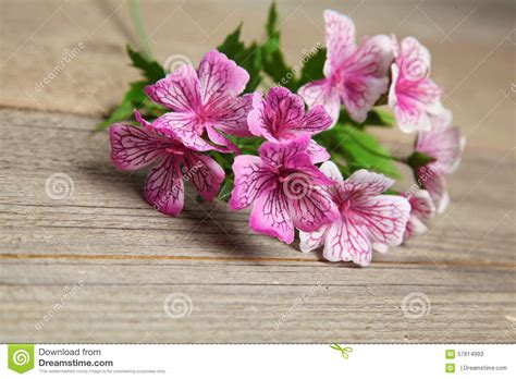 flower on table summer flower lying on the wooden table background stock