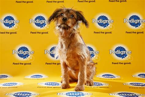 puppy bowl 2016 puppy bowl 2016 dilly reel with