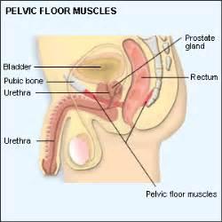 pelvic floor exercises for mydr au