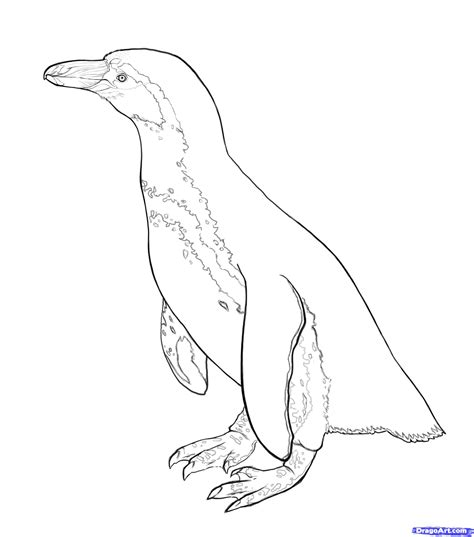 magellanic penguin coloring page how to draw penguins step by step arctic animals