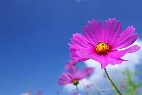 customizations   sap fiori logon landing