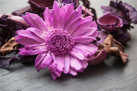 fiori secchi profumati come utilizzare i fiori secchi scelte per te