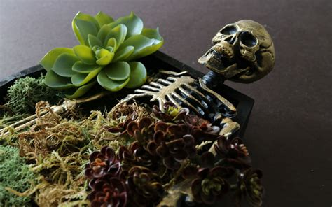 diy succulents halloween diy coffin succulent planter wild amor