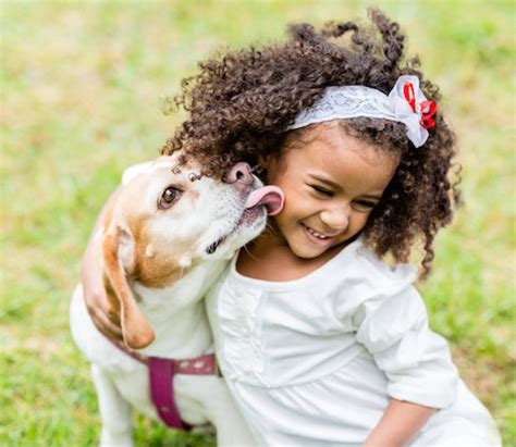 why do dogs like to be pet why do dogs like to our faces ethology institute cambridge