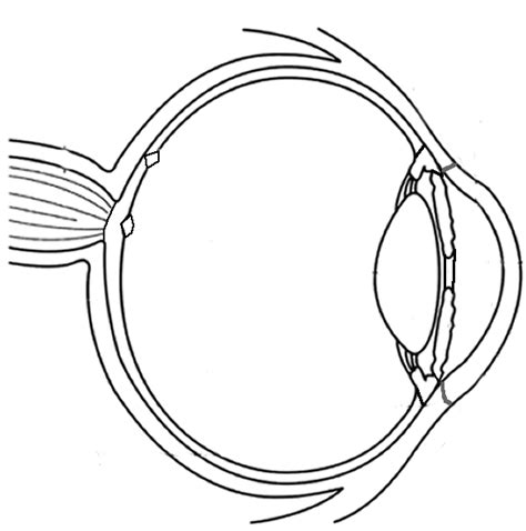 eye anatomy coloring page anatomy of the eye coloring