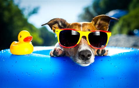 all wallpapers funny dogs wallpapers funny dog wallpapers hd wallpaper wiki