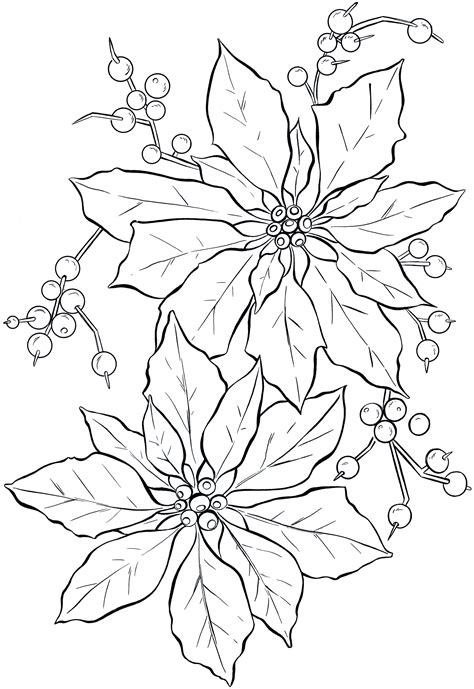 printable christmas drawings free printable poinsettia coloring pages for kids