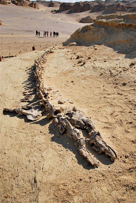western desert caign howlingpixel basilosaurus howlingpixel