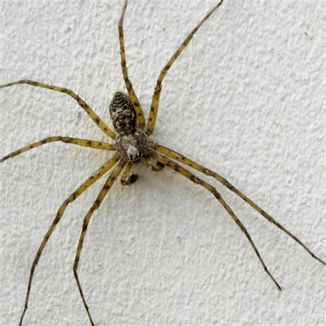 how to get rid of spiders in your house how to get rid of fear of spiders how to get rid of stuff
