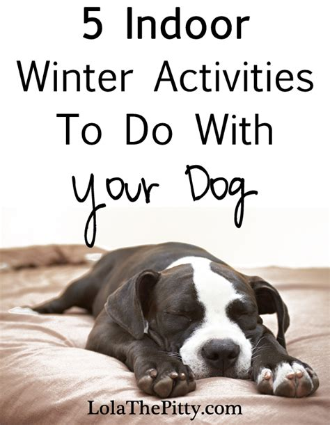 15 things not to do with a puppy books 5 indoor activities to do with your lola the pitty