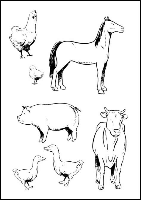 preschool baby animals coloring pages farm animal printables that actually look like the real