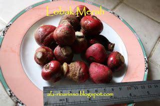 Bibit Lobak Merah Benih Radish saya lobak merah radish