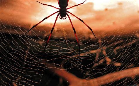 best hd web spiderweb wallpaper best hd wallpapers