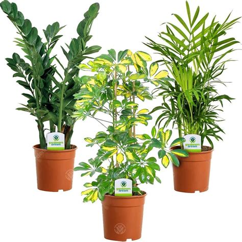 indoor plant mix  plants houseoffice  potted pot