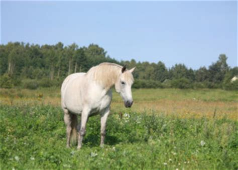 365 supplement for horses supplements store nutritional supplements for your