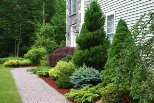 foundation plants for front yard 25 unique evergreen trees landscaping ideas on