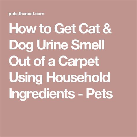 How To Get Cat Urine Out Of Rug how to get cat urine smell out of a carpet using