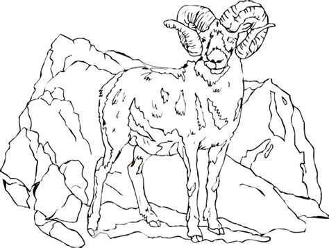 coloring pages mountain goat goat coloring pages getcoloringpages com