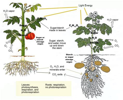 visuals how plants grow