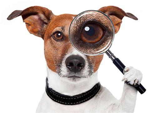 dati nazionale anagrafe canina ricerca microchip cani anagrafe canina dati