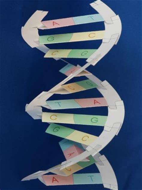 How To Make Dna Model With Paper - how to make dna model with paper 28 images wings and
