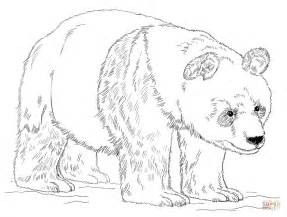baby pandas coloring pages az coloring pages