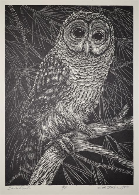 vintage owl illustrations   public domain