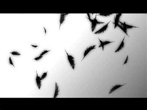 fallen feather film prueba plumas feathers test youtube