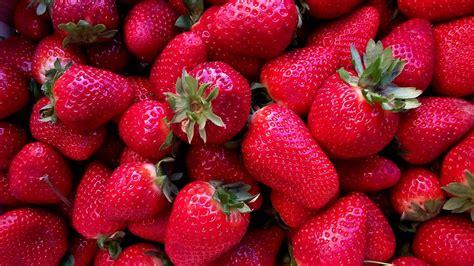imagenes de numa rojas fotos gratis fresas rojas pintura y artistas