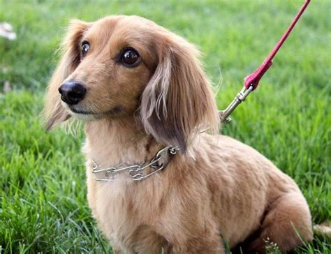 small breeds list small breeds dogs and small dogs on