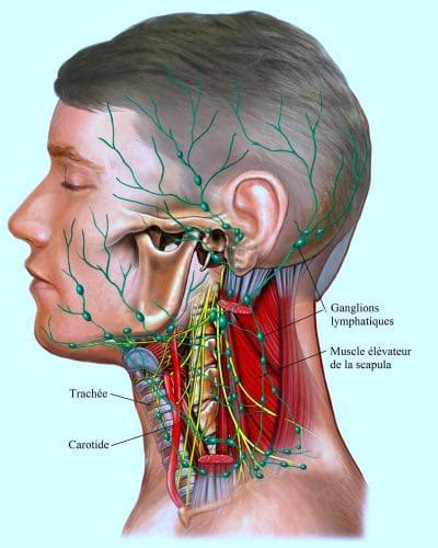 ganglions lymphatiques du cou gonfl 233 s et douloureux cancer