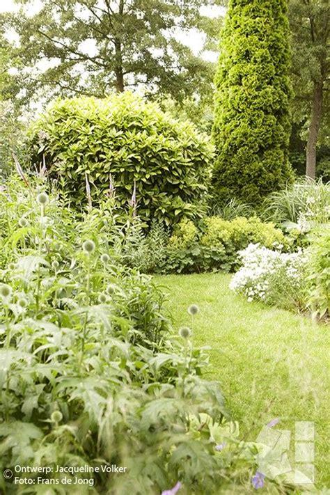 blauwe regen weinig bloemen 17 beste idee 235 n over blauwe tuin op pinterest bloeiende