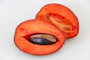mamey color image gallery mamey fruta