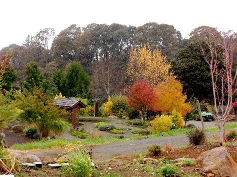 panoramio photo of oregon gardens silverton oregon fall