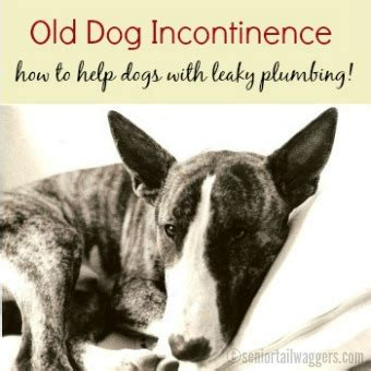 fecal incontinence in dogs incontinence help for your leaky