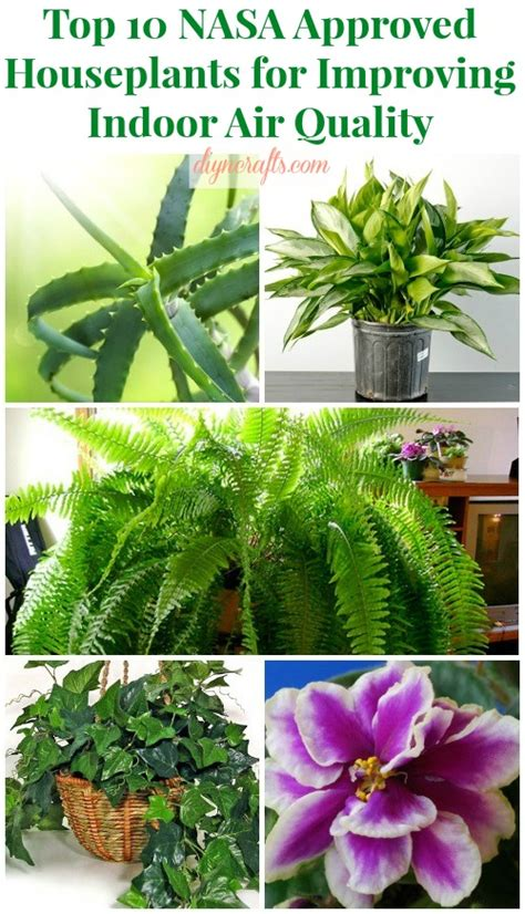 best plants for air quality top 10 nasa approved houseplants for improving indoor air