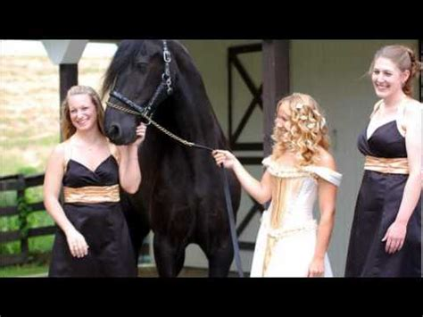 country horse wedding friesian medieval dress youtube
