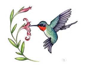hummingbird drawing ruby throated hummingbird by jessisamess on deviantart