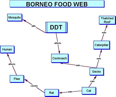 be for web ddt s effect on the food web