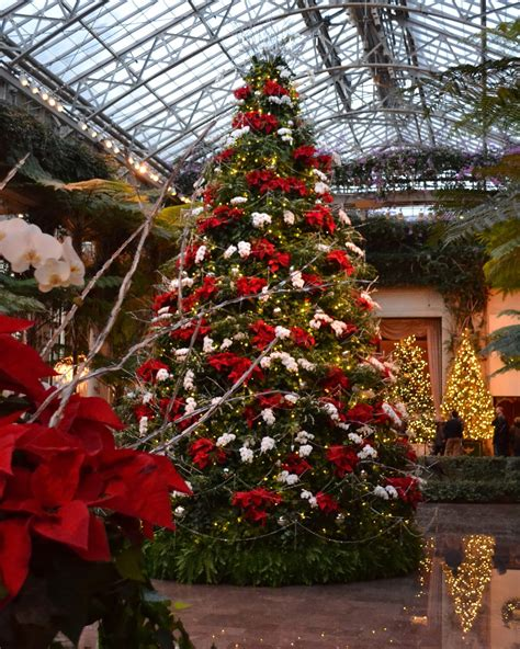 The Orchid Show Chandeliers My Paisley World A Stunning Christmas At Longwood Gardens