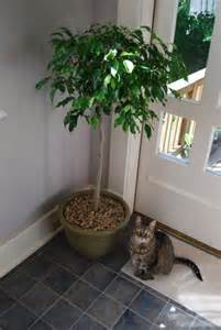 house plants safe for cats how to identify poisonous plants in the home