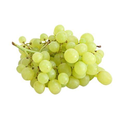 Benih Buah Anggur jual victory seed buah anggur hijau import benih tanaman 10 butir harga kualitas