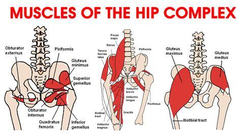 hip flexor diagram ask the physio hip flexors dancelife australia s